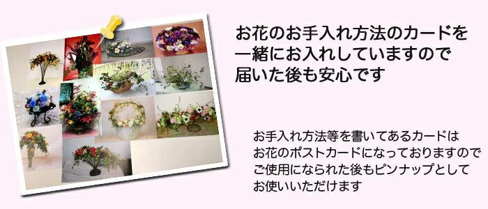 お花の手入れの説明書も お花のポストカードです