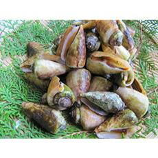 チャンバラ貝 1kg