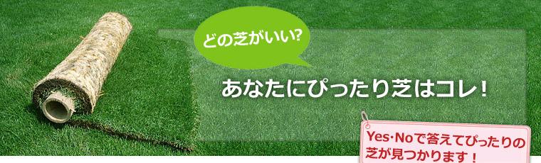 どの芝がいい?あなたにぴったり芝はコレ!