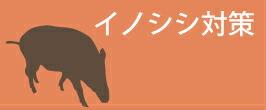 イノシシ 猪