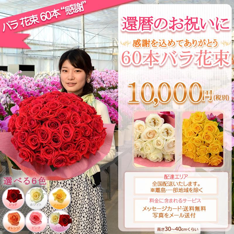 バラ 花束60本