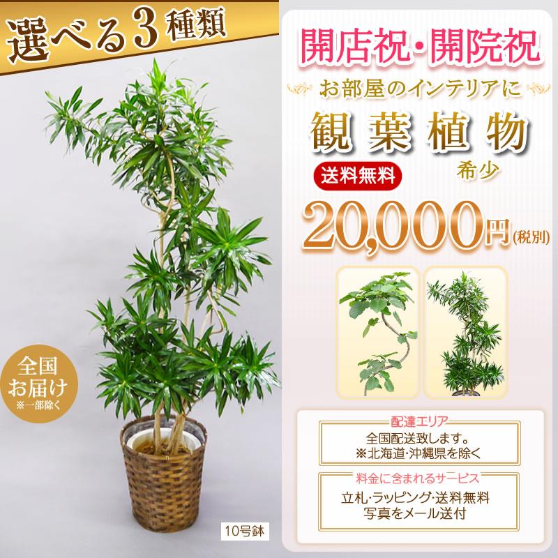 観葉植物 選べる7種類