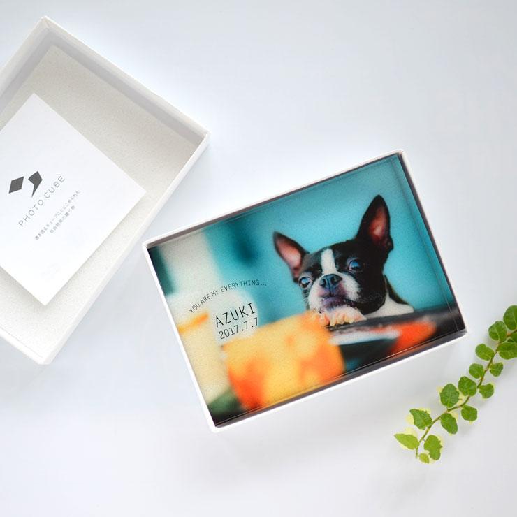 ペット,位牌,pet,犬,猫,記念写真