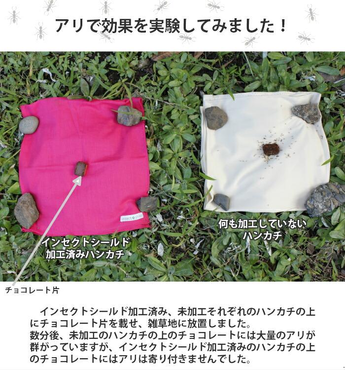 アリ,蟻での効果実験