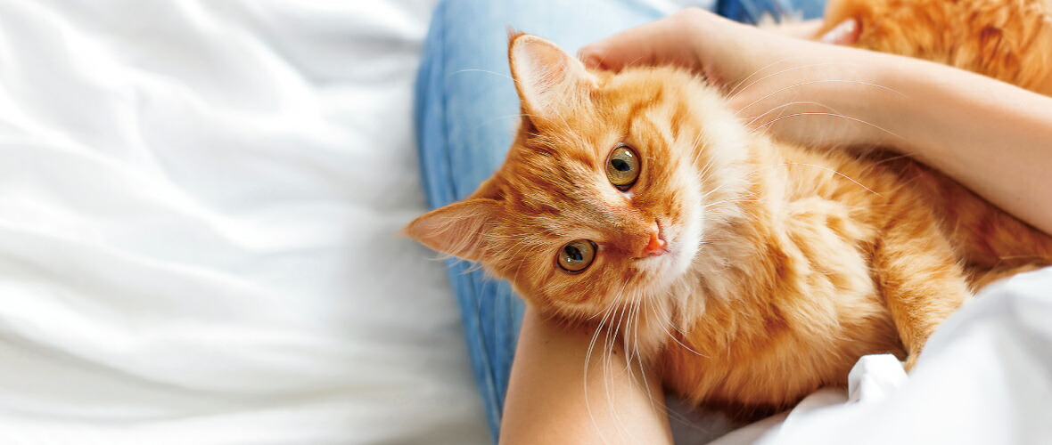 トップイメージ猫
