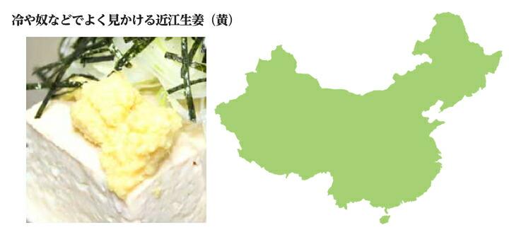 中国産近江生姜 種生姜