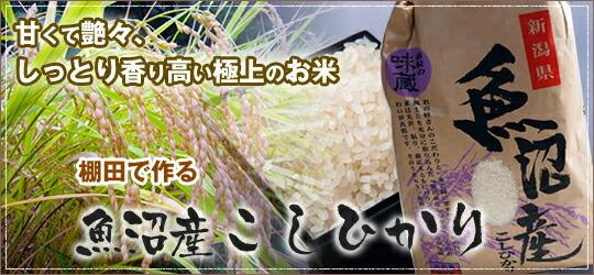 【新潟県 魚沼産 コシヒカリ 平成30年産 産直 5kg 棚田で作る魚沼産こしひかり