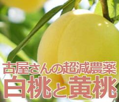 古屋さんの超減農薬桃
