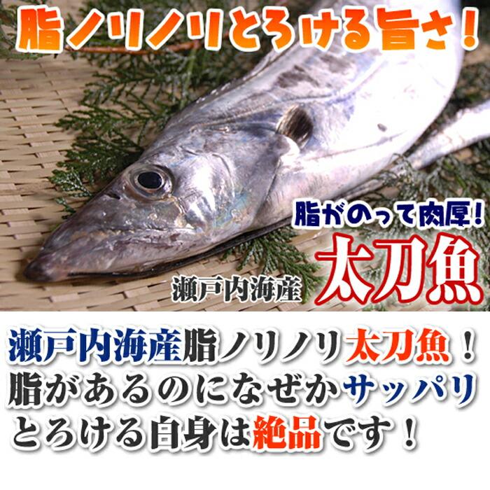 瀬戸内海産 太刀魚 たちうお タチウオ