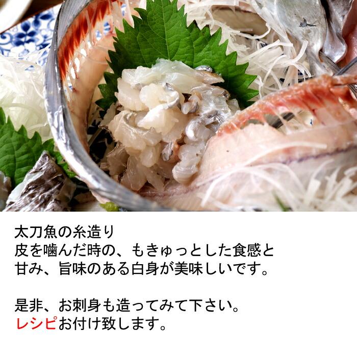 瀬戸内海産 太刀魚 たちうお タチウオ 糸造り