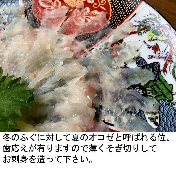 広島 おこぜ オコゼ お造り 刺身