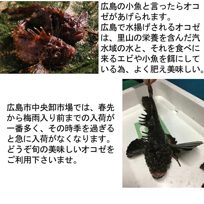 広島 おこぜ オコゼ 梅雨入り前までが旬