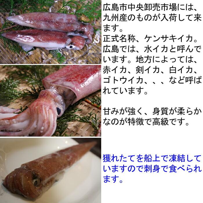 水いか 赤イカ 白いか ケンサキイカ 説明