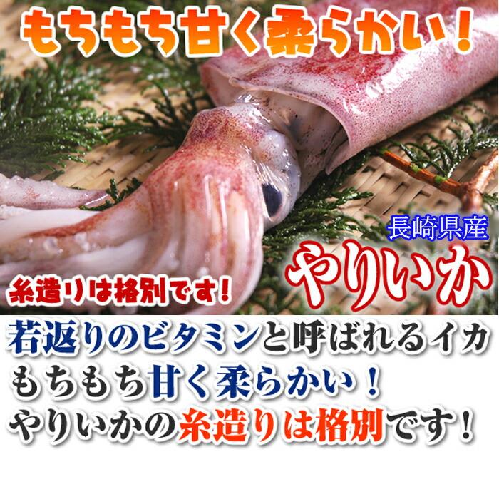 水いか 赤イカ 白いか ケンサキイカ