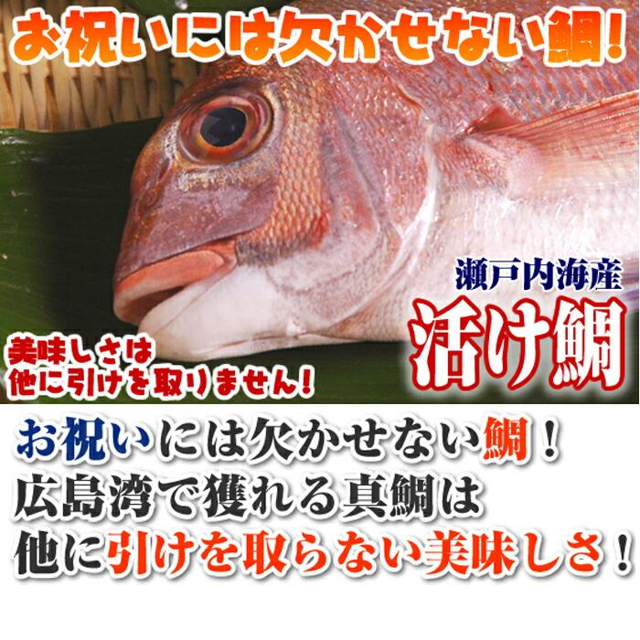 瀬戸内海産 天然鯛 2kg