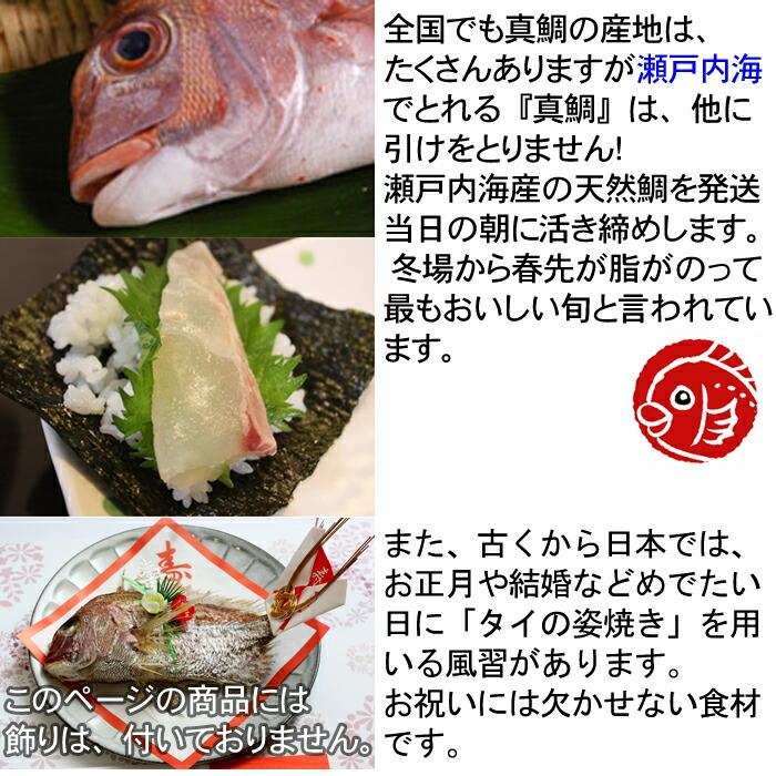 瀬戸内海産 天然鯛 2kg 冬場が特に美味しい