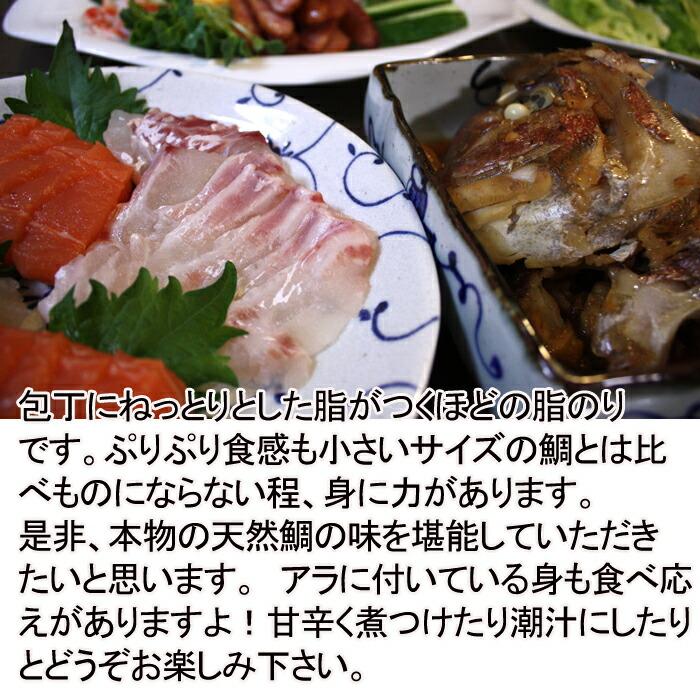 瀬戸内海産 天然鯛 2kg 身に力がある
