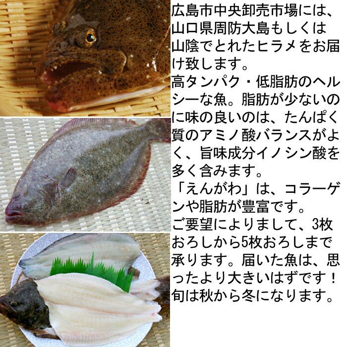 ひらめ 平目 ヒラメ