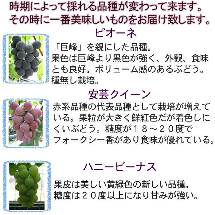 世羅ぶどう品種