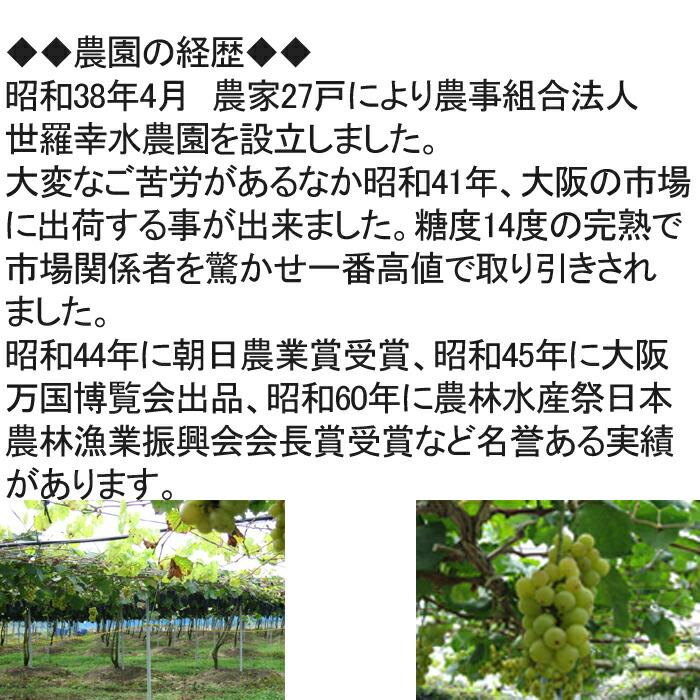 世羅ぶどう、農園の経歴