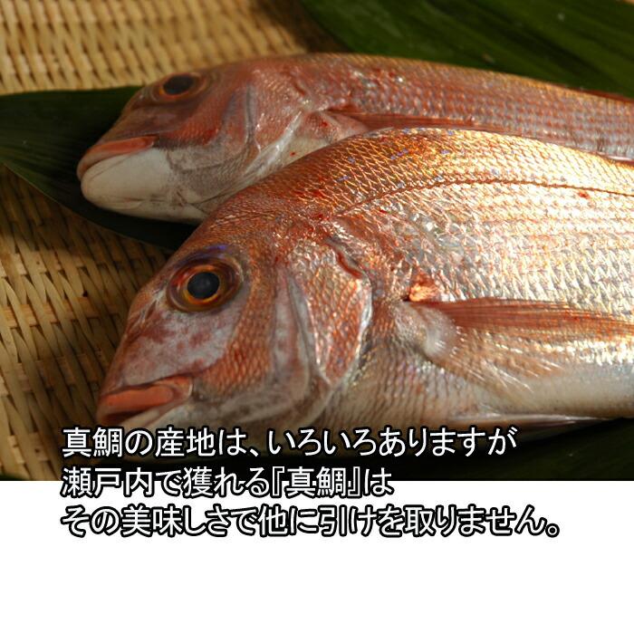 瀬戸内海 鯛