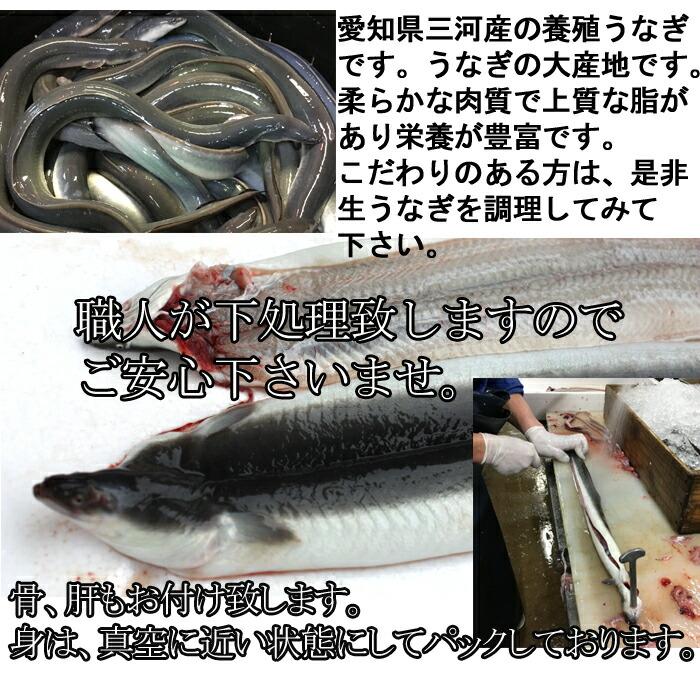 うなぎ ウナギ 鰻 愛知県三河産 バーベキュー BBQ 生