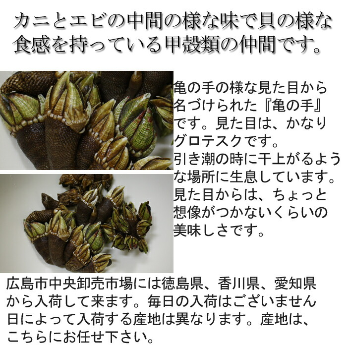 亀の手 愛媛 香川
