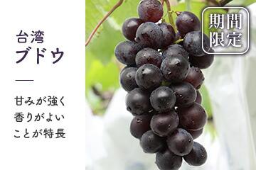 【期間限定販売】台湾ブドウ