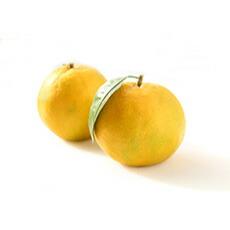 【期間限定販売】台湾完熟マンゴー 2個