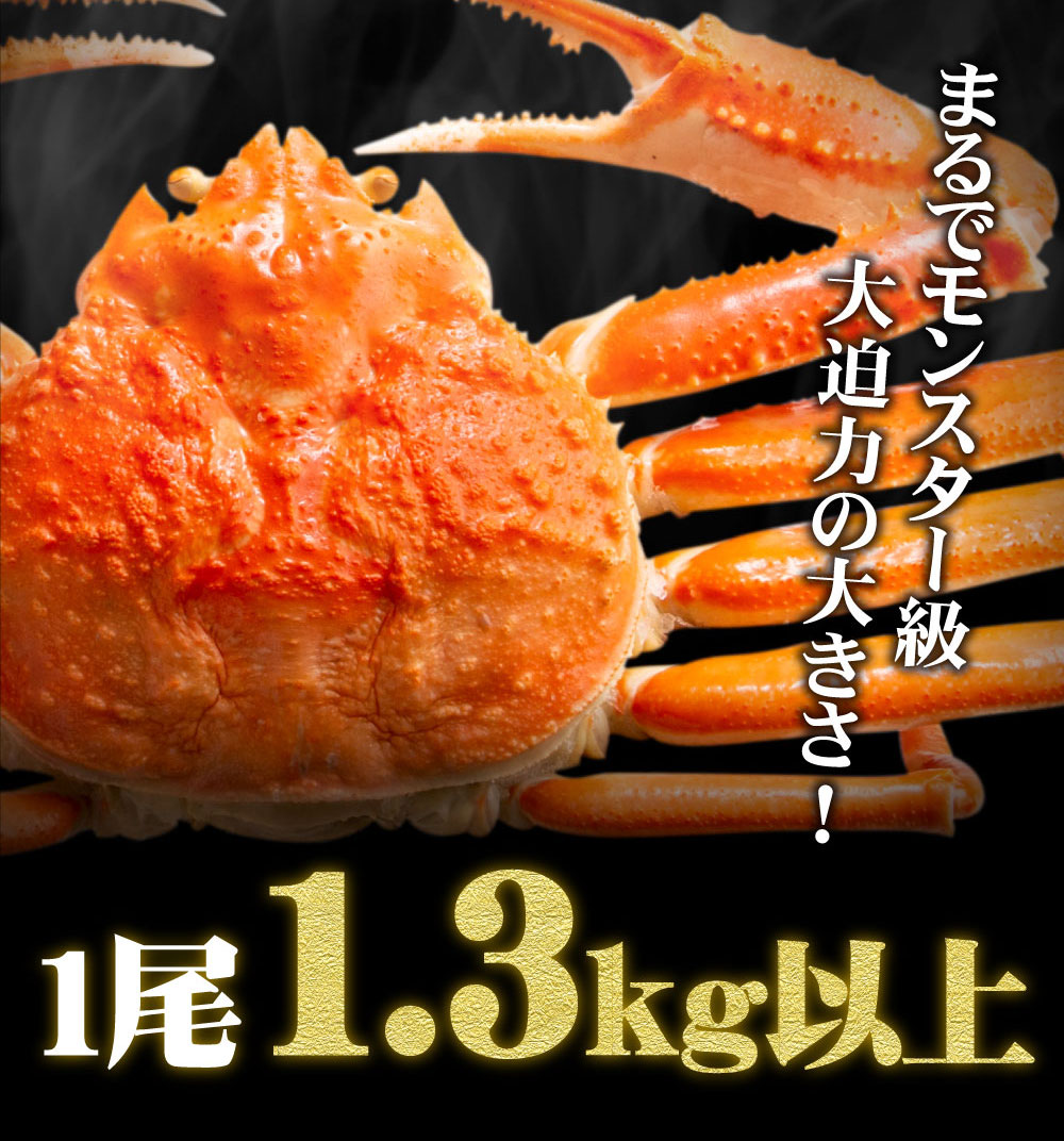『本ズワイ姿1.3kg』