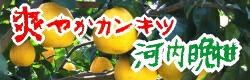 爽やか柑橘 河内晩柑