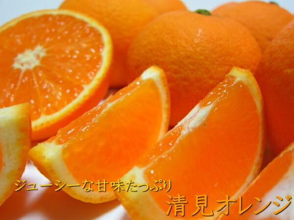 甘味たっぷり清見オレンジ