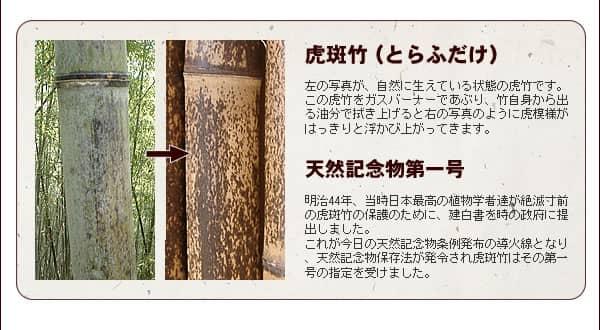 虎斑竹について