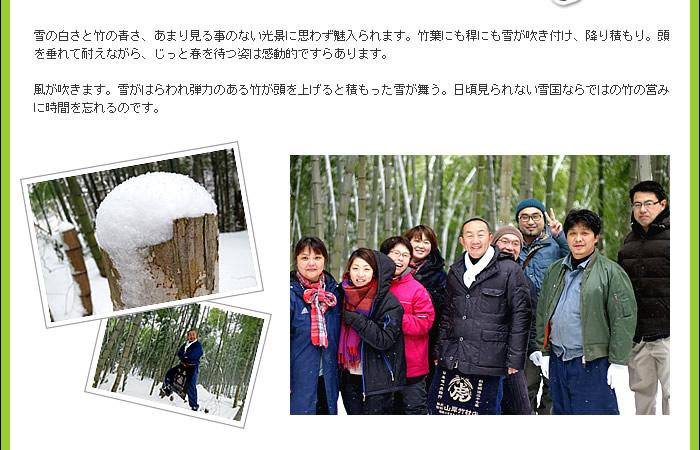 雪国ならではの竹の営み