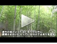 阪本啓一先生が虎竹の里にやって来られました!