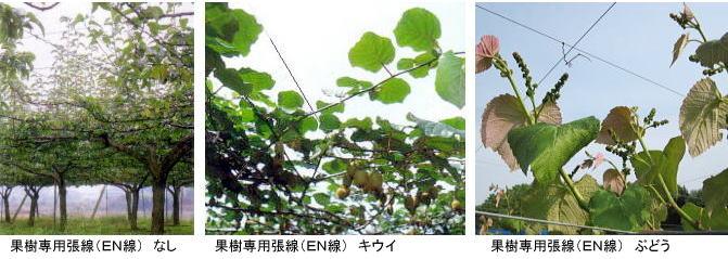 果樹専用張線半鋼線EN線 カラーワイヤー EN22の使用例