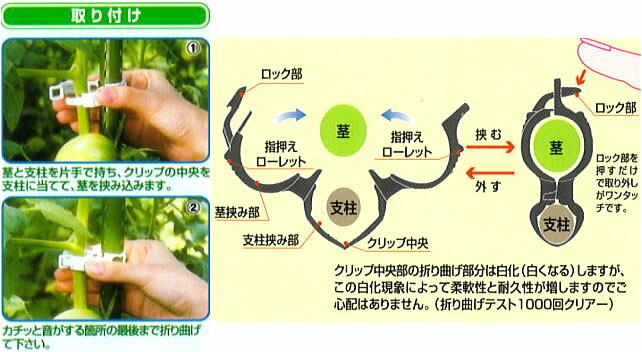 誘引資材 しちゅうキャッチの取り付け方法。茎と支柱を片手で持ち、クリップの中央を支柱に当てて、茎を挟み込みます。カチッと音がする箇所の最後まで折り曲げてください。