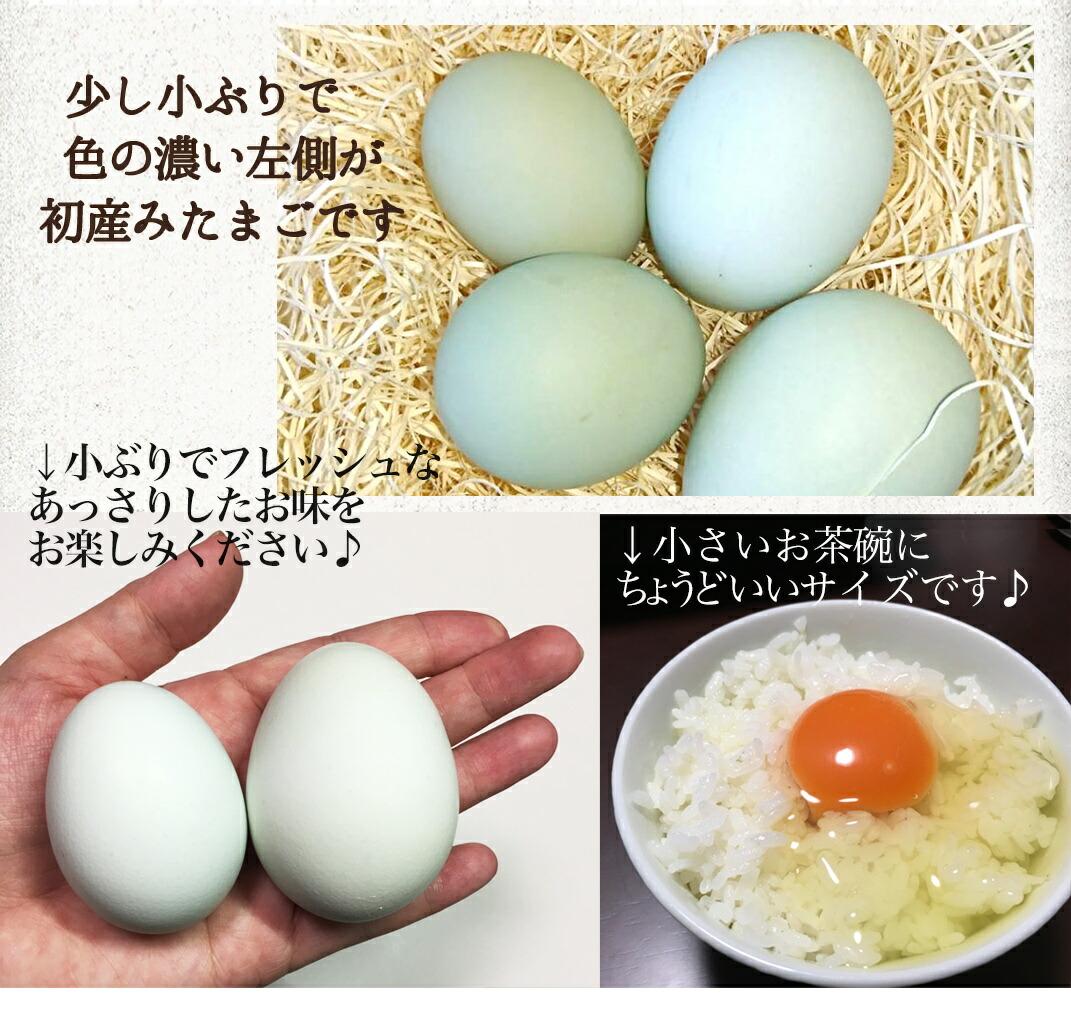 初産卵とは2