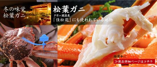 京都丹後 松葉ガニ・ズワイガニ11/6解禁