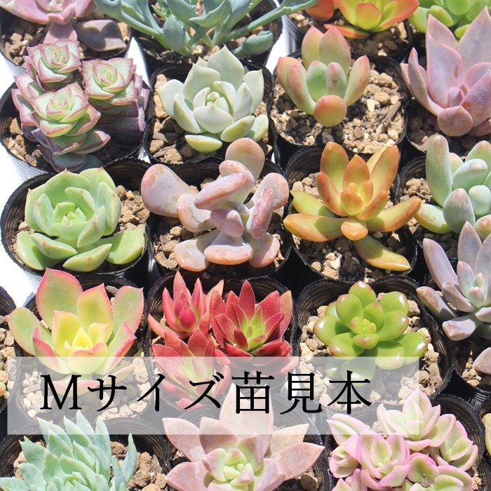 の 名前 植物 花・植物の英語名 ちょんまげ英語塾