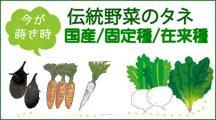 伝統野菜の種