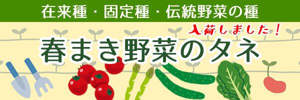 在来種・固定種・伝統野菜の種 春蒔きの種