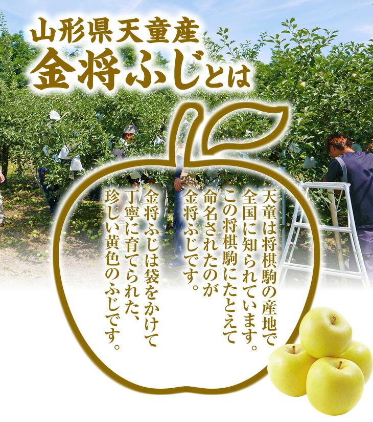 天童は将棋駒の産地で全国に知られています。この将棋駒にたとえて命名されたのが金将ふじです。金将ふじは袋をかけて丁寧に育てられた、珍しい黄色のふじです。