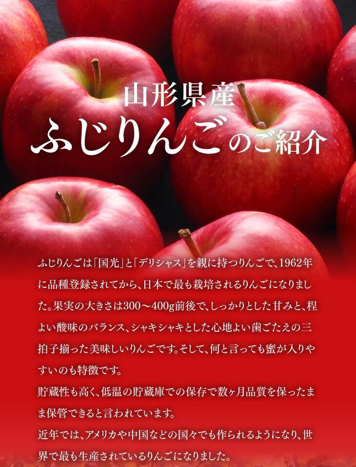 山形県産ふじりんごのご紹介 | ふじりんごは「国光」と「デリシャス」を親に持つりんごで、1962年に品種登録されてから、日本で最も栽培されるりんごになりました。果実の大きさは300〜400g前後で、しっかりとした甘みと、程よい酸味のバランス、シャキシャキとした心地よい歯ごたえの三拍子揃った美味しいりんごです。そして、何と言っても蜜が入りやすいのも特徴です。貯蔵性も高く、低温の貯蔵庫での保存で数ヶ月品質を保ったまま保管できると言われています。近年では、アメリカや中国などの国々でも作られるようになり、世界で最も生産されているりんごになりました。