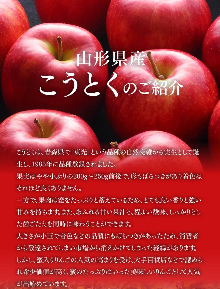 山形県産こうとくのご紹介|こうとくは、青森県で「東光」という品種の自然交雑から実生として誕生し、1985年に品種登録されました。果実はやや小ぶりの200g〜250g前後で、形もばらつきがあり着色はそれほど良くありません。一方で、果肉は蜜をたっぷりと蓄えているため、とても良い香りと強い甘みを持ちます。また、あふれる甘い果汁と、程よい酸味、しっかりとした歯ごたえを同時に味わうことができます。大きさが小玉で着色などの品質にもばらつきがあったため、消費者から敬遠されてしまい市場から消えかけてしまった経緯があります。しかし、蜜入りりんごの人気の高まりを受け、大手百貨店などで認められ希少価値が高く、蜜のたっぷりはいった美味しいりんごとして人気が出始めています。
