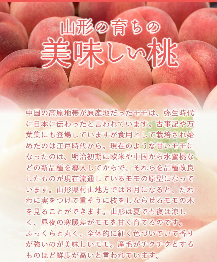 山形の育ちの美味しい桃 | 中国の高原地帯が原産地だったモモは、弥生時代に日本に伝わったと言われています。古事記や万葉集にも登場していますが食用として栽培され始めたのは江戸時代から。現在のような甘いモモになったのは、明治初期に欧米や中国から水蜜桃などの新品種を導入してからで、それらを品種改良したものが現在流通しているモモの原型になっています。山形県村山地方では8月になると、たわわに実をつけて重そうに枝をしならせるモモの木を見ることができます。山形は夏でも夜は涼しく、昼夜の寒暖差がモモを甘く育てるのです。ふっくらと丸く、全体的に紅く色づいていて香りが強いのが美味しいモモ。産毛がチクチクとするものほど鮮度が高いと言われています。