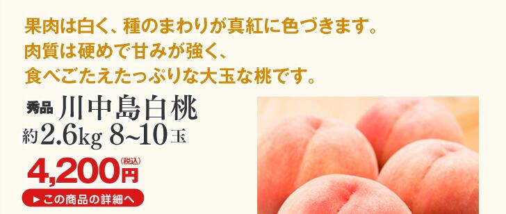 山形県産桃 川中島白桃2.6kg | 果肉は白く、種のまわりが真紅に色づきます。肉質は硬めで甘みが強く、食べごたえたっぷりな大玉な桃です。