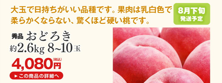 山形県産桃 おどろき約2.6kg | 大玉で日持ちがいい品種です。果肉は乳白色で柔らかくならない、驚くほど硬い桃です。