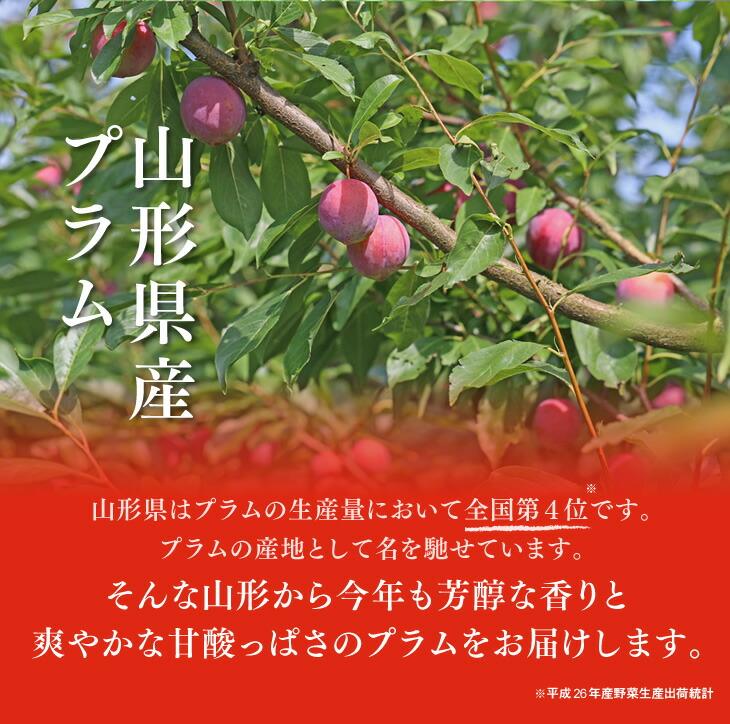 山形県産プラム すもも | 山形県はプラム・すももの生産量において全国第4位です。プラムの産地として名を馳せています。そんな山形から今年も芳醇な香りと爽やかな甘酸っぱさのプラムをお届けします。
