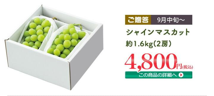 シャインマスカット 約1.6kg(2房)